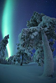 Northern lights over snowy darkness