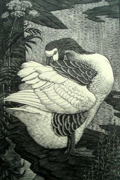 """""""The Goose"""" by Charles Frederick Tunnicliffe (wood engraving) Art Canard, Botanical Illustration, Illustration Art, Scratchboard, Wood Engraving, Woodblock Print, Painting & Drawing, Encaustic Painting, Printmaking"""