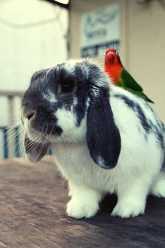 a bunny...with a colorful bird...