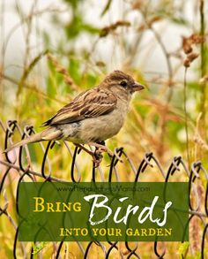 Attract birds to your garden for pest management Organic Gardening, Gardening Tips, Kitchen Gardening, Container Gardening, Bird House Kits, Bird Aviary, How To Attract Birds, Beneficial Insects, Backyard Birds
