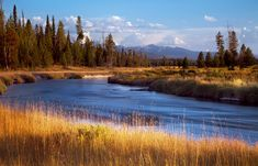 Bechler Meadows, Bechler River, Grand Tetons, Yellowstone National Park, Wyoming, WY, waters, glowing, fields, photo