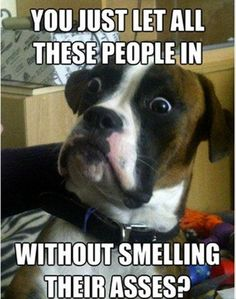Dump A Day funny dogs - Dump A Day