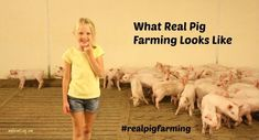 What real pig farming looks like. Kids on the farm.