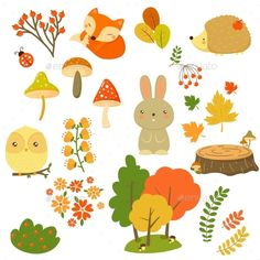 Autumn Forest Plants and Animals - Seasons Nature