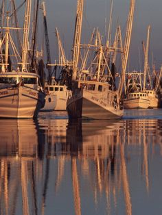 When we finally get settled in our new place, I definitely want to spend some days out on a shrimp boat  ~C