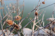 Se podrían llamar flores no?   Secas silvestres.