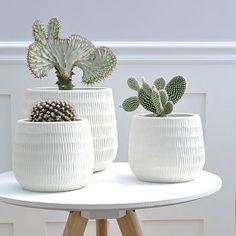 Cactus and succulents. Cacti And Succulents, Planting Succulents, Potted Plants, Indoor Plants, Planting Flowers, House Plants Decor, Plant Decor, Cactus Plante, Pottery Pots