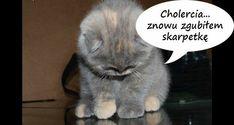 wszystkie memy z neta :v # Humor # amreading # books # wattpad Funny Cat Compilation, Diy Shirt, Funny Cats, Pikachu, Haha, Funny Memes, Cute, Animals, Texts