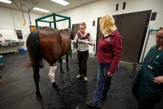 . Radiology Schools, Horses, Animals, Animales, Animaux, Animal, Animais, Horse