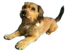 Resultado de imagen para eft en perros