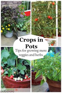 pots: success with vegetable container gardening Growing delicious fruits, vegetables, and herbs in containers is easy with these great tips.Growing delicious fruits, vegetables, and herbs in containers is easy with these great tips. Growing Veggies, Growing Herbs, Container Gardening Vegetables, Container Plants, Gemüseanbau In Kübeln, Pot Jardin, Pot Plante, Home Vegetable Garden, Organic Gardening Tips