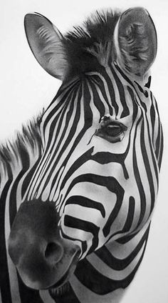 Zebra drawing by Kevin Hayward Zebra Drawing, Zebra Painting, Drawing Drawing, Animals And Pets, Baby Animals, Cute Animals, Zebras, Zebra Tattoos, Zebra Face