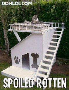 #Funny #Animals #Pics