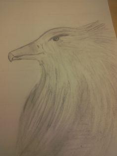 Mijn adelaar na 1 les