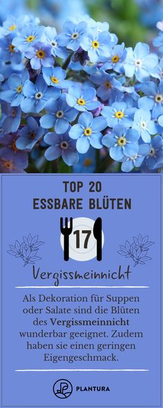 Unsere Top 20 essbaren Blüten Top 20 edible flowers: forget-me-not! The beautiful flowers of forget-me-not really remain in your memory. With their low taste, they are wonderful for decorating dishes. Edible Garden, Garden Pots, Planting Succulents, Planting Flowers, Beautiful Gardens, Beautiful Flowers, Balcony Flowers, Fleurs Diy, Diy Garden Projects