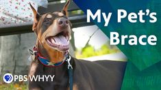 Running with the Big Dogs: My Pet's Brace - You Oughta Know (2020) You Oughta Know, Brace Yourself, Knee Brace, Dog Walking, Big Dogs, Braces, Pitbulls, Running, Pets