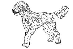 goldendoodle line drawing - Google Search
