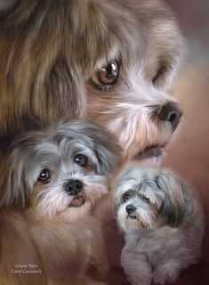 Lhasa Apso by Carol Cavalaris, available at Fine Art America.  This pet painting of an adorable little Lhasa Apso is from the Dog and Cat collection of art by Carol Cavalaris.
