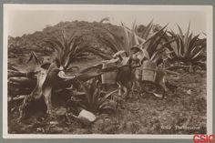 Retrato de tlachiqueros, que se dedicaban a extraer el aguamiel de maguey para obtener pulque.