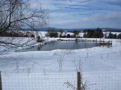 Woody Strawderman of Harrisonburg, Virginia took this picture just south of Harrisonburg.  #WHSVsnow