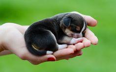 Tout ce qui est petit est mignon : ces animaux qui tiennent dans le creux de…