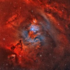 "A Fox Fur, a Unicorn, and a Christmas Tree – Image by Rolf Geissinger. More from NASA: ""What do the following things have in common: a cone, the fur of a fox, and a Christmas tree? Answer: they all occur in the constellation of the unicorn (Monoceros). Pictured as a star forming region cataloged as NGC 2264, the complex jumble of cosmic gas and dust is about 2,700 light-years distant and mixes reddish emission nebulae excited by energetic light from newborn stars with dark interstellar dust…"