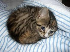 Why It Matters: Because of the tastefully striped duvet, and because of the way it matches those eyes, which contain multitudes.