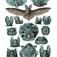 Chiroptera Bats in Turquoise