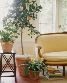 Get To Know Your 5 Feng Shui Money Areas