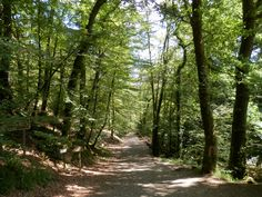 Huelgoat Forest, Brittany France