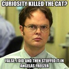 Angela's cat