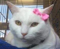 Brian's Home.  Adopt cats, we deserve it!  Blanca is in foster care with Foster Paws Rescue in Greenville SC