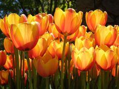 A Million Blooms - Lewis Ginter Botanical Garden