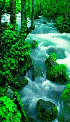 a essncia do amor em poesia lindos lugares da natureza comunidade