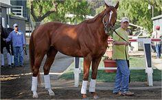 Curlin, sire of Rachel Alexandra's new colt
