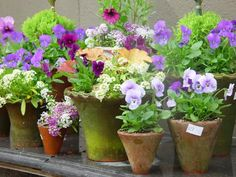 Pansies and other cool weather potted plants.