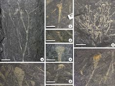Diverse Devonian Plant Assemblage from Early Flood Copyright Fair Use, Institute For Creation Research, Scientific Reports, True Roots, Vascular Plant, Science News, Tree Bark, History Books, Historia