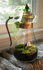 english cottage vintage coffee server moss terrarium | Flickr - Photo Sharing!