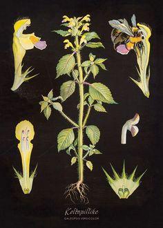 Julisteet, TARJOUS 5 kpl (IS101691) Botanical Illustration, Botanical Prints, Illustration Art, Vintage Country, Graphic Design Posters, Vintage Travel Posters, Pictures To Paint, Teaching Tables, Comic Art
