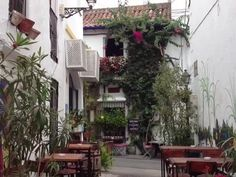 a quiet street in Marbella Old Town , lovely. Marbella Old Town, Beautiful Places, Street, Plants, Plant, Walkway, Planets