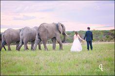 Zimbabwean wedding with elephants {www.lindytruter.com}