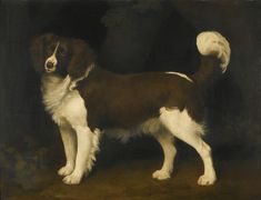 """""""Portrait of a Dark Brown and White Newfoundland Spaniel"""" by George Stubbs. 1784 oil on panel. Set for acution 9 July 2014 at Sotheby's London. Pre-auction estimate £200,000-300,000 GBP ($333,460-500,190 USD). Price realized: 482,500GBP ($826,957 USD)."""
