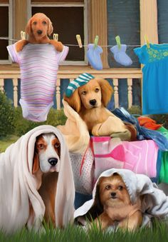 Thomas Wood...hey, is your dog wearing your clean towel??