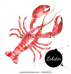 Find Watercolor Hand Drawn Lobster Isolated Fresh stock images in HD and millions of other royalty-free stock photos, illustrations and vectors in the Shutterstock collection. Lobster Tattoo, Lobster Art, Watercolor Background, Floral Watercolor, Watercolor Paintings, Watercolors, Free Vector Images, Vector Free, Botanical Illustration
