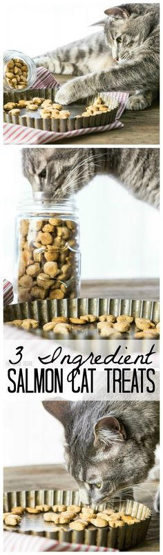 3 Ingredient Salmon Cat Treats!! These are SO easy and our cat loves them!! Mini fish cracker shape makes them extra fun!