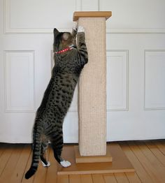#SmartCat #scratcher is a very versatile item. It is #great for removing the old nails from the #claws, for marking the territory and for full vertical stretching. To cut the long story short, with #Post your #pet will always be well-groomed and joyful. #Great #value. cat #scratchingpost #cattree #catfurniture #cattower #catcondo #catscratchers #cattoys #cattreehouse #catbeds #catpost #catperch #cheap #best #cat #scratchingpost #catclimber #catsupplies