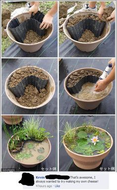 Lily pad flower pot!
