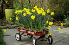 spring color in a wagon for a cute (and mobile) container