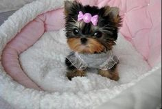 Cute ... <3 - https://www.facebook.com/pages/I-Love-Halloween/169866862192?fref=ts