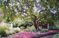 Photo of Prescott park,Portsmouth,NH that has inspired me a painting that has been  sold♥